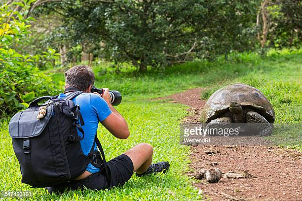 ecuador, galapagos islands, santa cruz, man photographing galapagos giant tortoise - santa cruz island galapagos islands stock pictures, royalty-free photos & images
