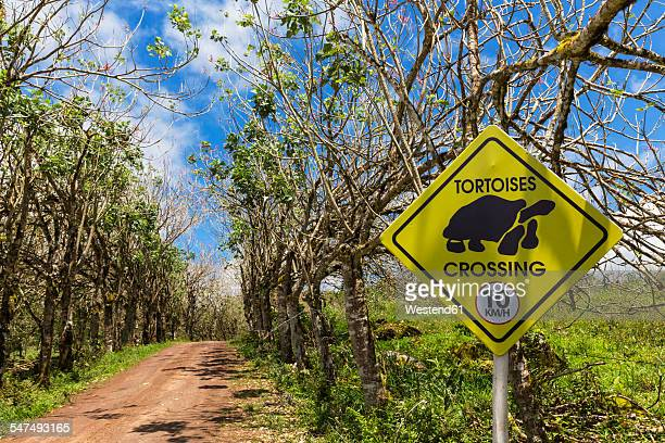 ecuador, galapagos islands, santa cruz, speed limit sign at treelined road - santa cruz island galapagos islands stock pictures, royalty-free photos & images