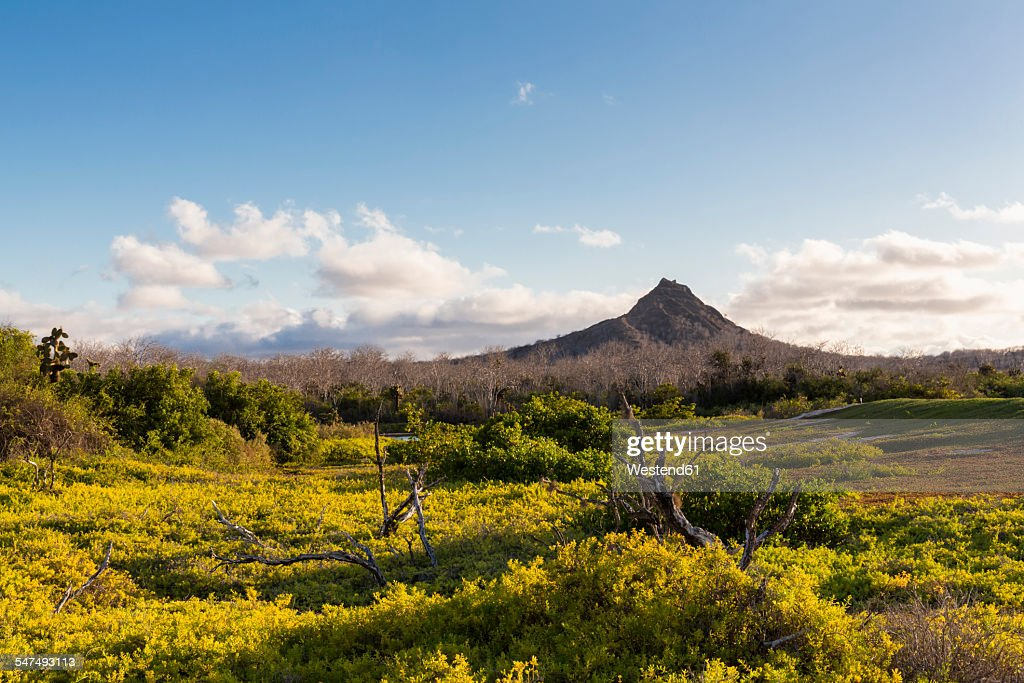 Ecuador, Galapagos Islands, Santa Cruz, view to volcano : Foto de stock
