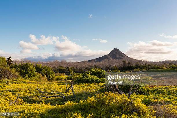 ecuador, galapagos islands, santa cruz, view to volcano - santa cruz island galapagos islands stock pictures, royalty-free photos & images