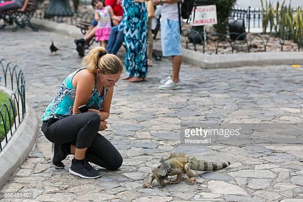 ecuador, guayaquil, parque seminario, female tourist watching green iguana - guayaquil fotografías e imágenes de stock