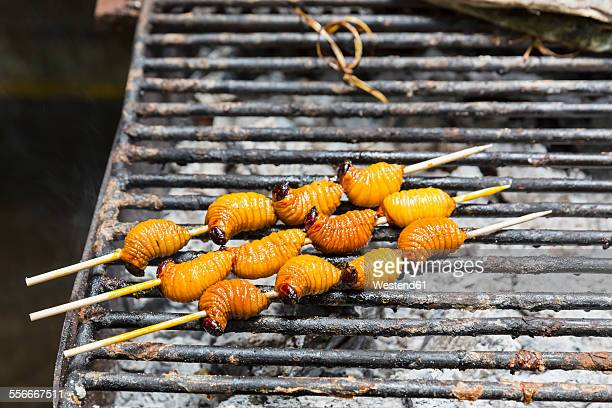 ecuador, puerto francisco de orellana, grilled larva of trunk beetle - insecte photos et images de collection