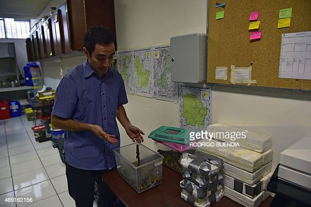 Ecuadorean scientist Omar Torres Carvajal shows Enyalioides Rubrigularis lizards inside a box during an interview with AFP in Quito on April 9 2015...