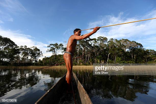 Ecutia one of the best fisherman in the Kamayura village fishes with a traditional bow and arrow in a dugout canoe on May 8 in the village of...