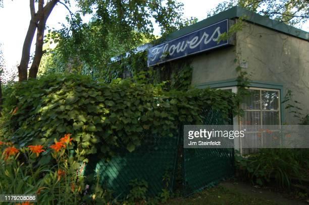 Ed Ackerson's Flowers Studio in Minneapolis Minnesota on July 17 2006 Photo by Jim Steinfeldt/Michael Ochs Archives/Getty Image