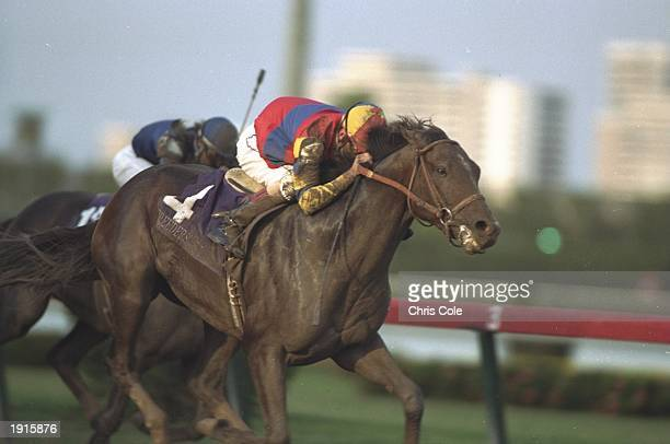 Eddie Delahsussaye on A P Indy races in the Breeders Cup Classic Race during a meeting at Gulfstream Park Miami Florida AP Indy goes on to win the...