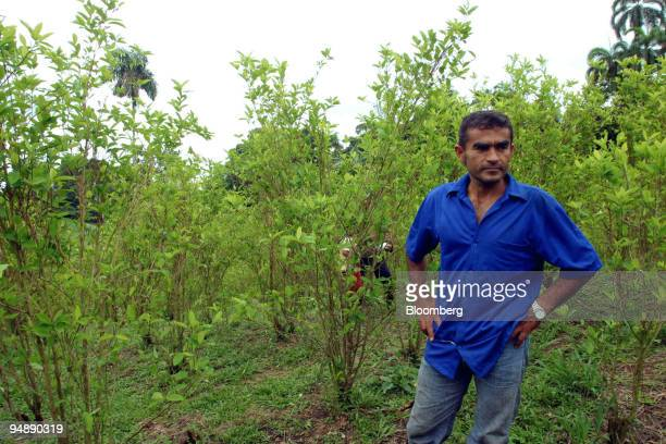 Edelberto Narvaez stands in a family coca field just outside of Orito in the southern state of Putumayo Colombia on Wednesday November 2 2005