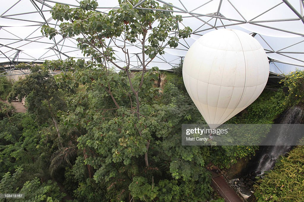 Eden horticulturist John Nichol takes in the view of the canopy of the Rainforest Biome as & Gardeners At The Eden Project Use Helium Balloon To Reach Tree ...