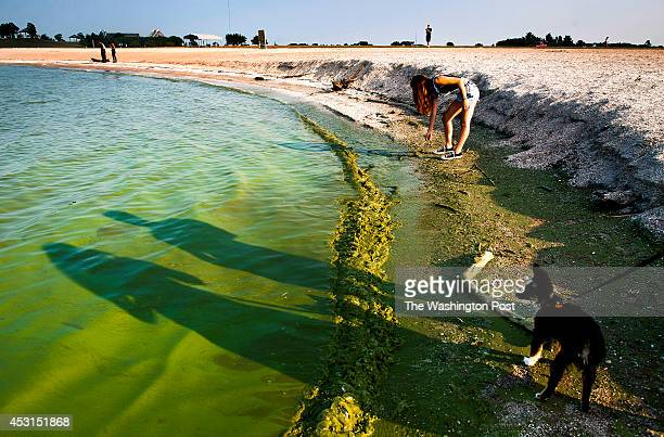 Eden Rogers uses a stick to try and scoop algae off the shoreline as the shadows of her sisters Brittany Rogers and Danielle Rogers with Danielle's...