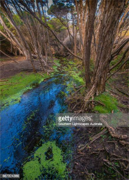 Eden's creek, Palana, Flinders Island, Bass Strait, Tasmania, Australia.
