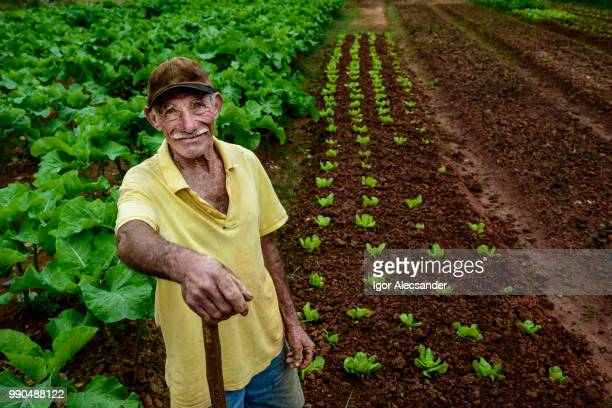 Ederly farmer at plantation