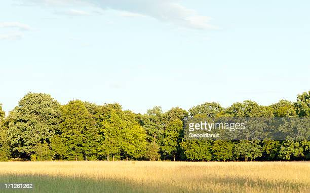 edge of a deciduous wood with summer meadow infrontof. - at the edge of stock pictures, royalty-free photos & images