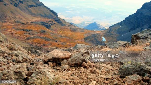 edge of cliff macro silder summit steens mountain near malhuer wildlife refuge 1 - steens mountain stock pictures, royalty-free photos & images