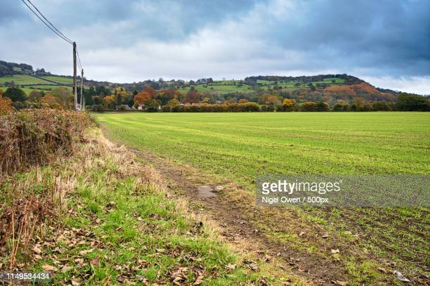edge of the hedge - nigel owen stock pictures, royalty-free photos & images