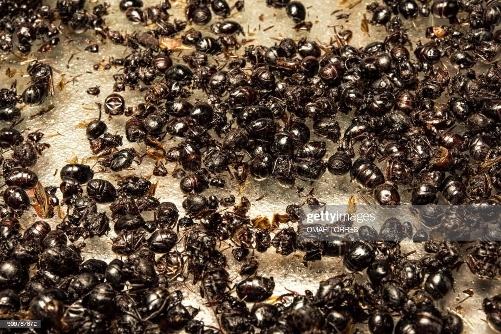 Edible black ants are seen at the San Juan Market in Mexico City on