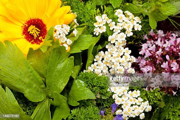 Edible flowers and herbs