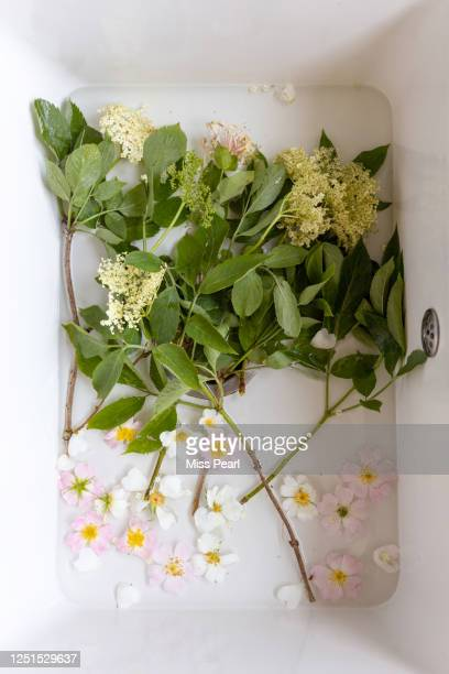 edible flowers are washed in sink - kildare stock pictures, royalty-free photos & images