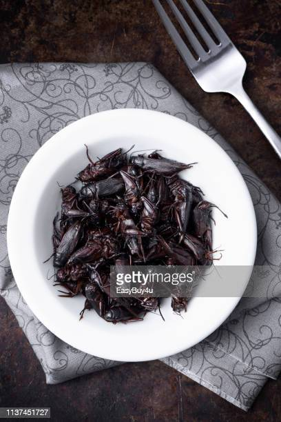 edible insects - cricket insect stock pictures, royalty-free photos & images