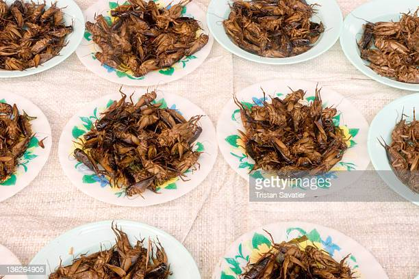 Edible insects roasted crickets snacks