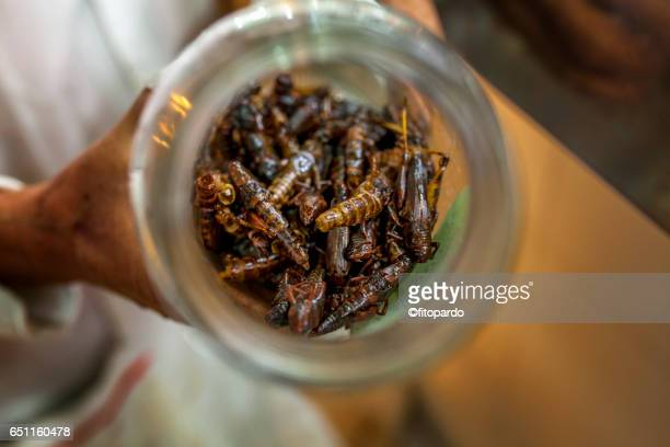 edible mexican chapulines (grasshoppers) large - cricket insect stock photos and pictures