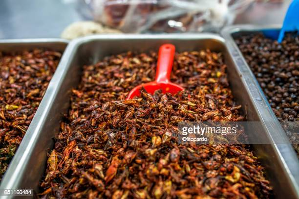 edible mexican chapulines (grasshoppers) - cricket insect photos stock pictures, royalty-free photos & images