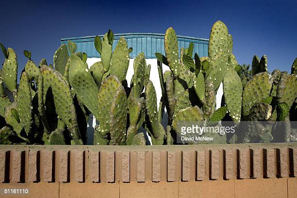 Edible nopales or prickly pear cactus are seen near a residential trailor on August 11 2004 near the town of Arvin southeast of Bakersfield...