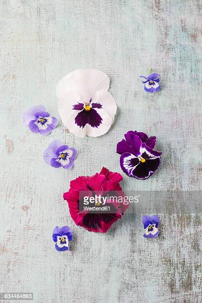 edible pansies and violets - pansy stock pictures, royalty-free photos & images