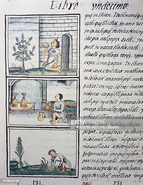 Edible plants page from Book XI of the Florentine Codex bilingual version in Spanish and Nahuatl General History of the Things of New Spain by the...