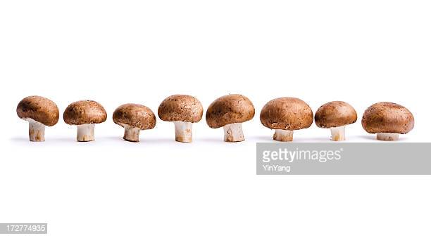 edible portabello mushrooms, vegetables in a row, isolated on white - edible mushroom stock pictures, royalty-free photos & images