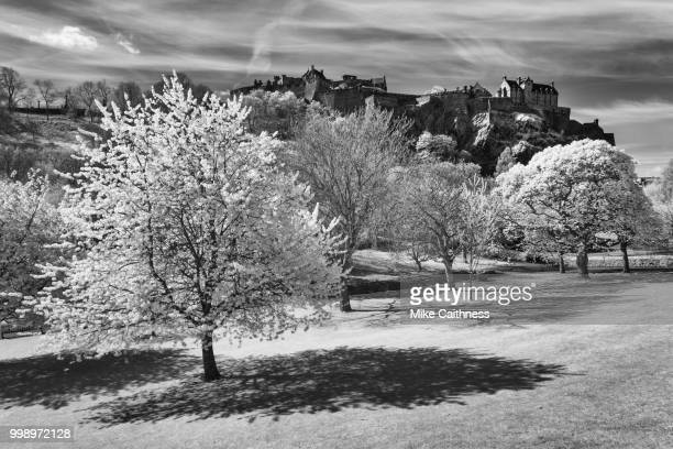 edinburgh castle from the gardens - mike caithness stock pictures, royalty-free photos & images