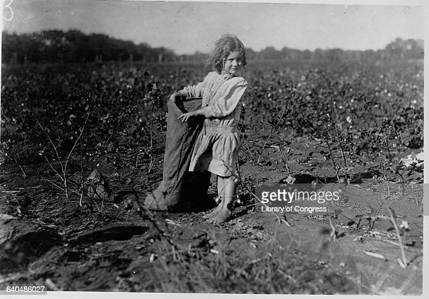 Edith a five year old girl picks cotton on HM Lane's farm in Bells Texas | Location Bells Texas