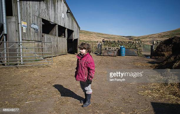 Edith Owen looks on as new lambs are brought into a barn at Ravenseat the farm of the Yorkshire Shepherdess Amanda Owen on April 15 2014 near Kirkby...