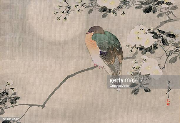 Edo period Japanese painting on silk of a wood pigeon perched on the branch of a blooming cherry tree 19th century Watercolor on silk