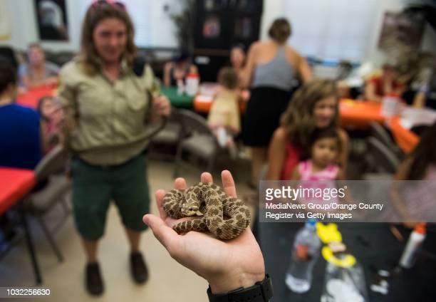 Education Animal Keeper Lauren Serrano holds up Juliete a Western Hognose snake during the Orange County Zoo's Animals in My Backyard preschool...