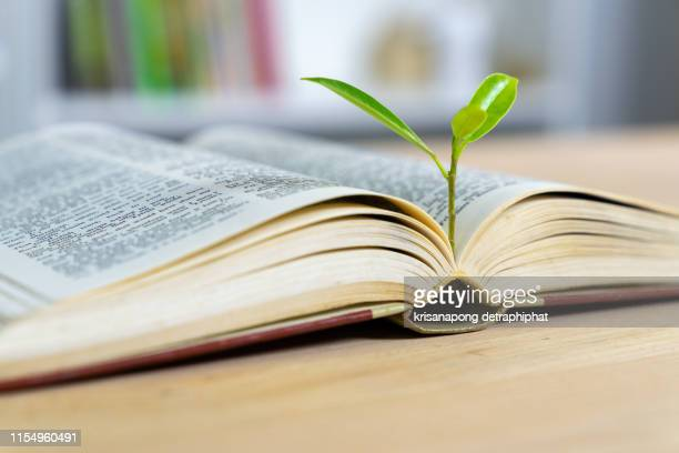 education concept with tree of knowledge planting on opening old big book - 綴り ストックフォトと画像