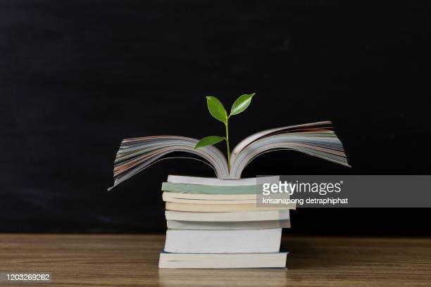 education concept with tree of knowledge planting on opening old big book - 検査業務 開始の地 ストックフォトと画像