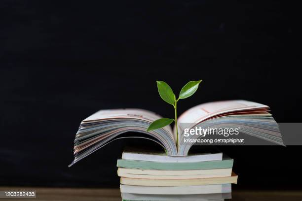 education concept,books and trees. - month stock pictures, royalty-free photos & images
