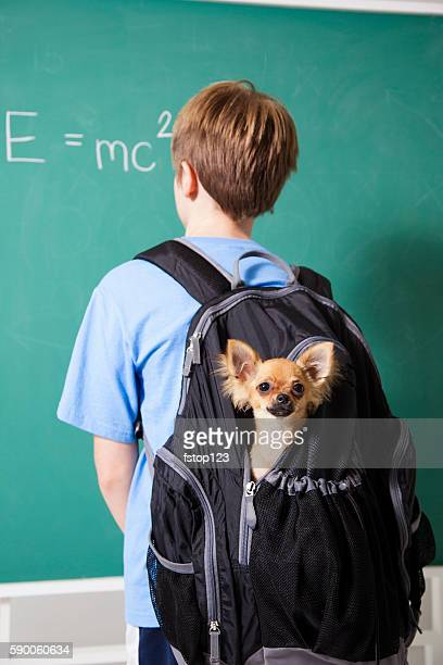 Education: Pre-teenage student brings his pet dog back to school.