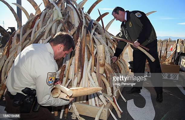 Edward Grace Deputy Assistant Director for Law Enforcement for the US Fish and Wildfire Service destroys six tons of confiscated ivory during US...
