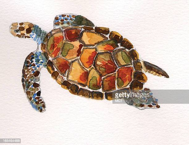 Eeli Polli color illustration of a green turtle