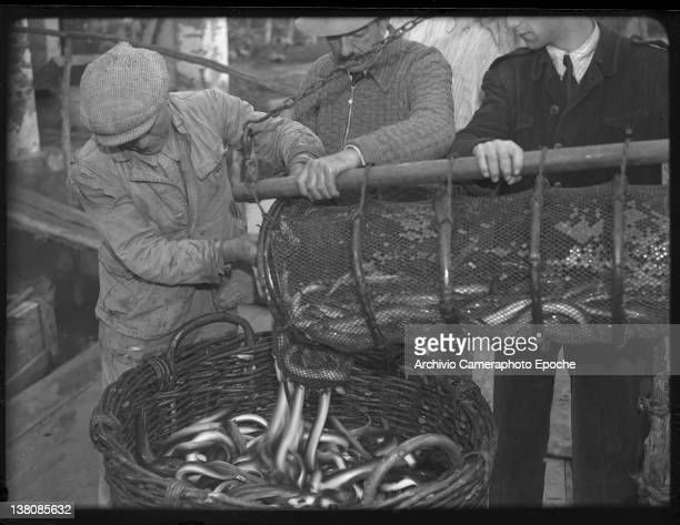 Eels fishing scene with fishermen using baskets to carry the catch of the day Venice 1946
