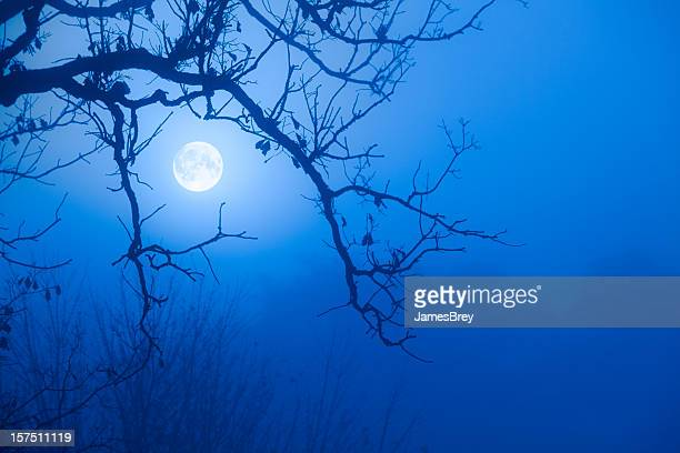 Eerie Blue Moon Through October Fog, Scarry Oak Tree Branches