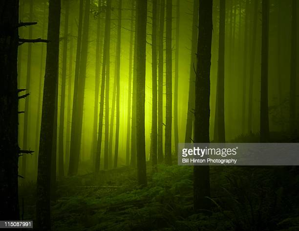 Eerie green forest at night
