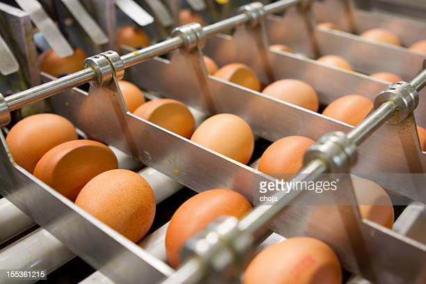 Egg factory...production line with fresh eggs
