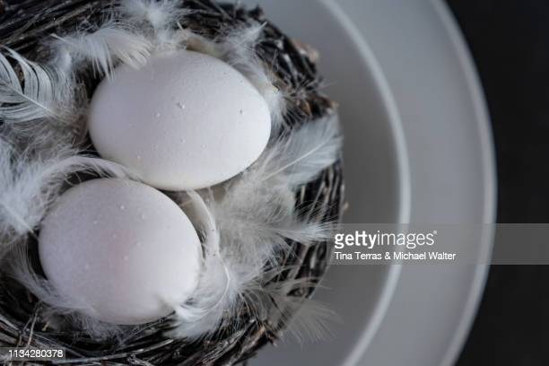 egg in nest on white background. easter. - kreativität stock pictures, royalty-free photos & images