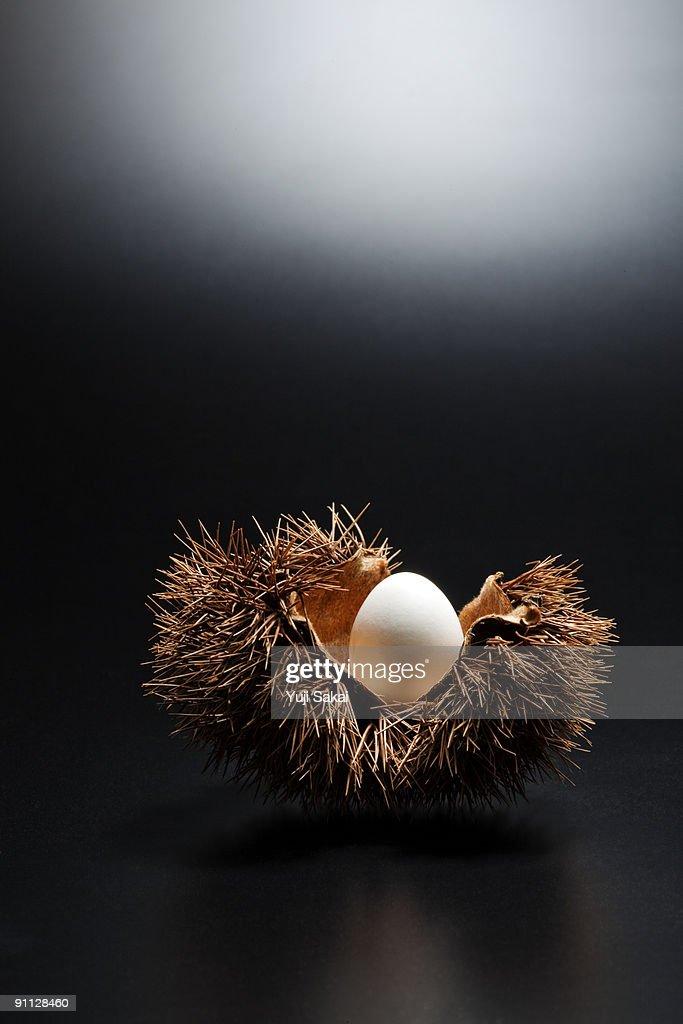 egg in the chestnut bur : Stock Photo