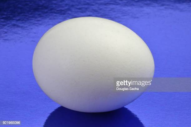 Egg on a blue background