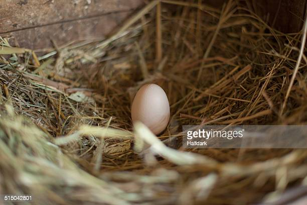 egg on dry grass - chicken coop stock pictures, royalty-free photos & images