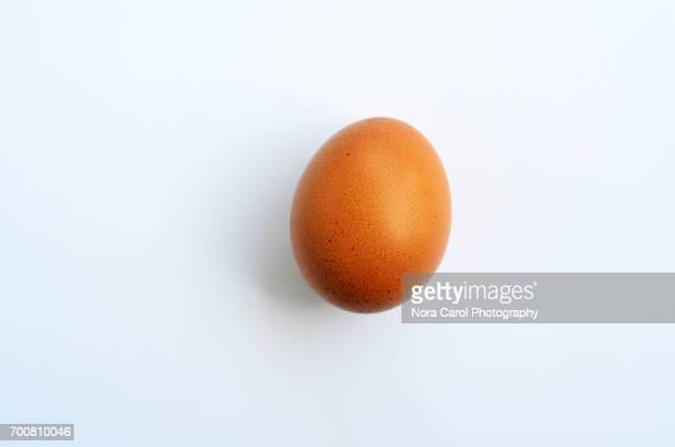 egg on white background - one animal stock pictures, royalty-free photos & images