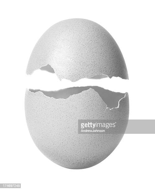 egg - animal egg stock pictures, royalty-free photos & images